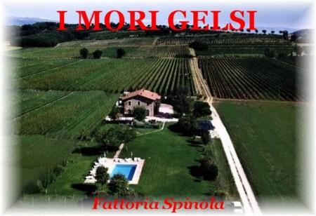 Agriturismo I Mori Gelsi