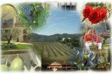 Agriturismo Prolivum